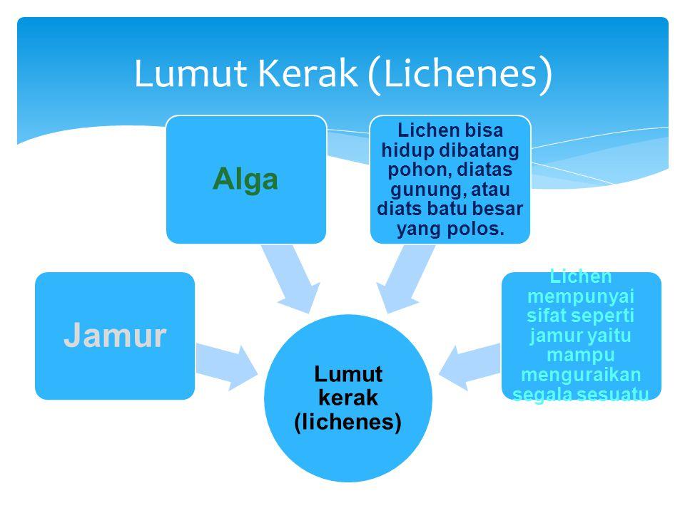 Jamur Alga Lichen bisa hidup dibatang pohon, diatas gunung, atau diats batu besar yang polos. Lichen mempunyai sifat seperti jamur yaitu mampu mengura