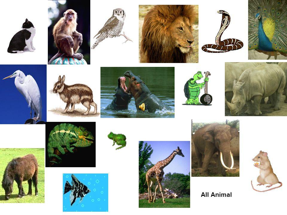 Belajar Spirit Dari Sifat Binatang By Mr. Lutfi (paknewulan.wordpress.com)