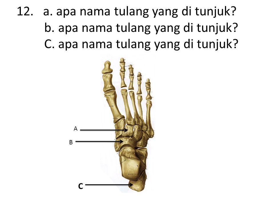 12. a. apa nama tulang yang di tunjuk. b. apa nama tulang yang di tunjuk.
