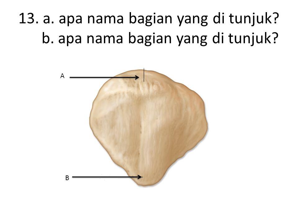 13. a. apa nama bagian yang di tunjuk b. apa nama bagian yang di tunjuk A B