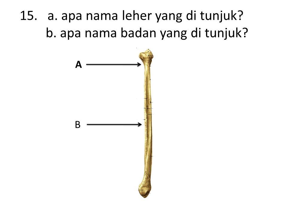 15. a. apa nama leher yang di tunjuk b. apa nama badan yang di tunjuk A B