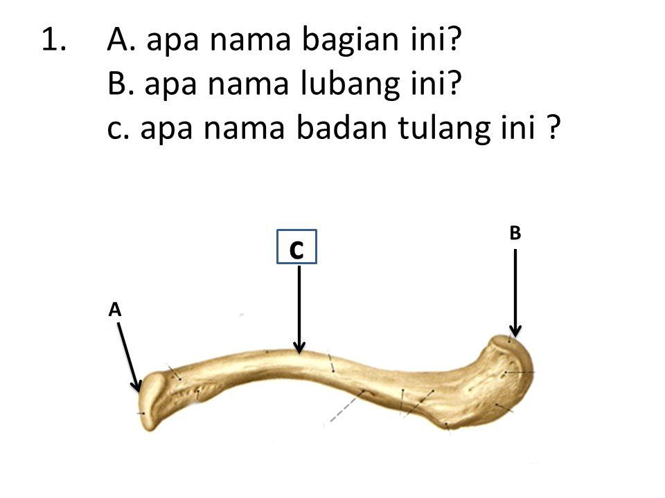 1.A. apa nama bagian ini B. apa nama lubang ini c. apa nama badan tulang ini A B c