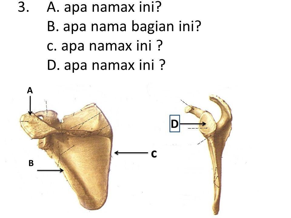 4.A. apa nama bagian iini? B. apa nama x ini? A B