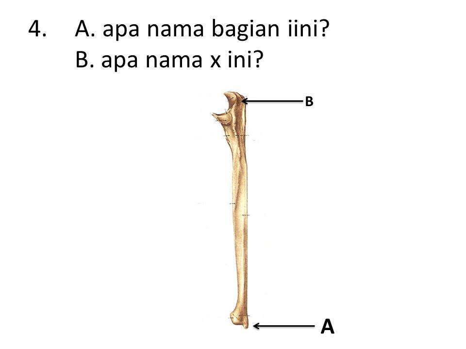 4.A. apa nama bagian iini B. apa nama x ini A B