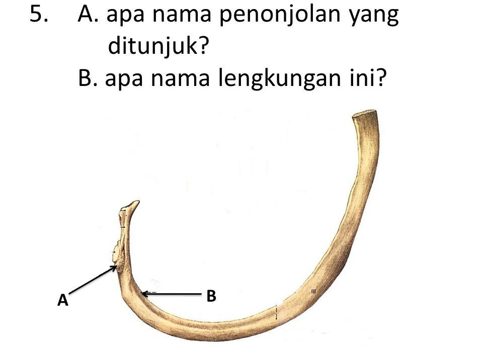 5.A. apa nama penonjolan yang ditunjuk B. apa nama lengkungan ini A B