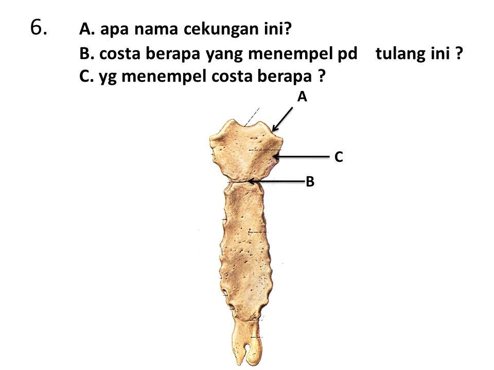 6. A. apa nama cekungan ini. B. costa berapa yang menempel pd tulang ini .