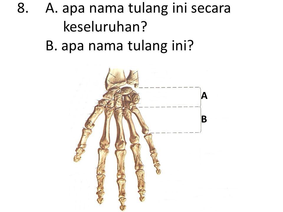 8.A. apa nama tulang ini secara keseluruhan B. apa nama tulang ini A B