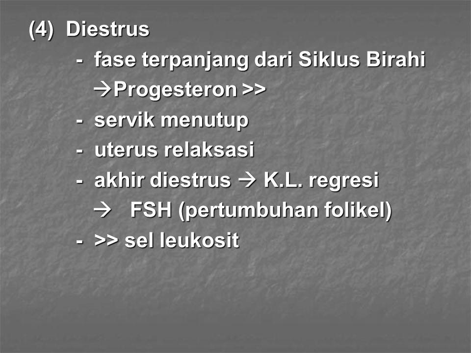 (4) Diestrus - fase terpanjang dari Siklus Birahi  Progesteron >>  Progesteron >> - servik menutup - uterus relaksasi - akhir diestrus  K.L. regres