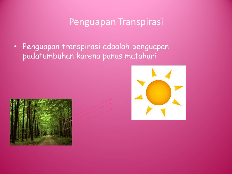 Penguapan Transpirasi Penguapan transpirasi adaalah penguapan padatumbuhan karena panas matahari