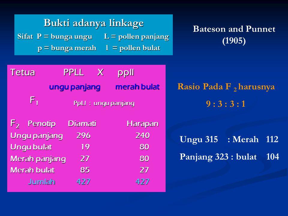 Bukti adanya linkage Sifat P = bunga ungu L = pollen panjang p = bunga merah l = pollen bulat p = bunga merah l = pollen bulat Tetua PPLL X ppll ungu