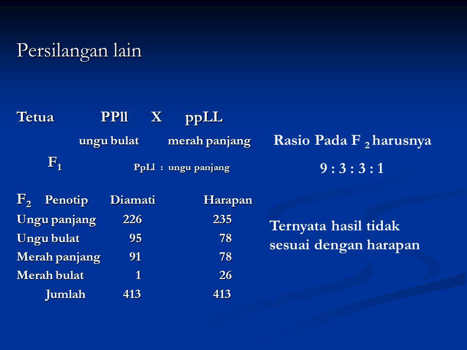 Tetua PPll X ppLL ungu bulat merah panjang ungu bulat merah panjang F 1 PpLl : ungu panjang F 1 PpLl : ungu panjang F 2 PenotipDiamatiHarapan Ungu pan