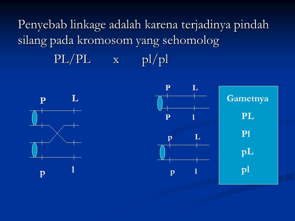 Penyebab linkage adalah karena terjadinya pindah silang pada kromosom yang sehomolog PL/PL x pl/pl PL/PL x pl/pl P l p L Pl PL lp Lp Gametnya PL Pl pL