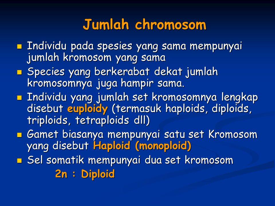 Jumlah chromosom Individu pada spesies yang sama mempunyai jumlah kromosom yang sama Individu pada spesies yang sama mempunyai jumlah kromosom yang sa