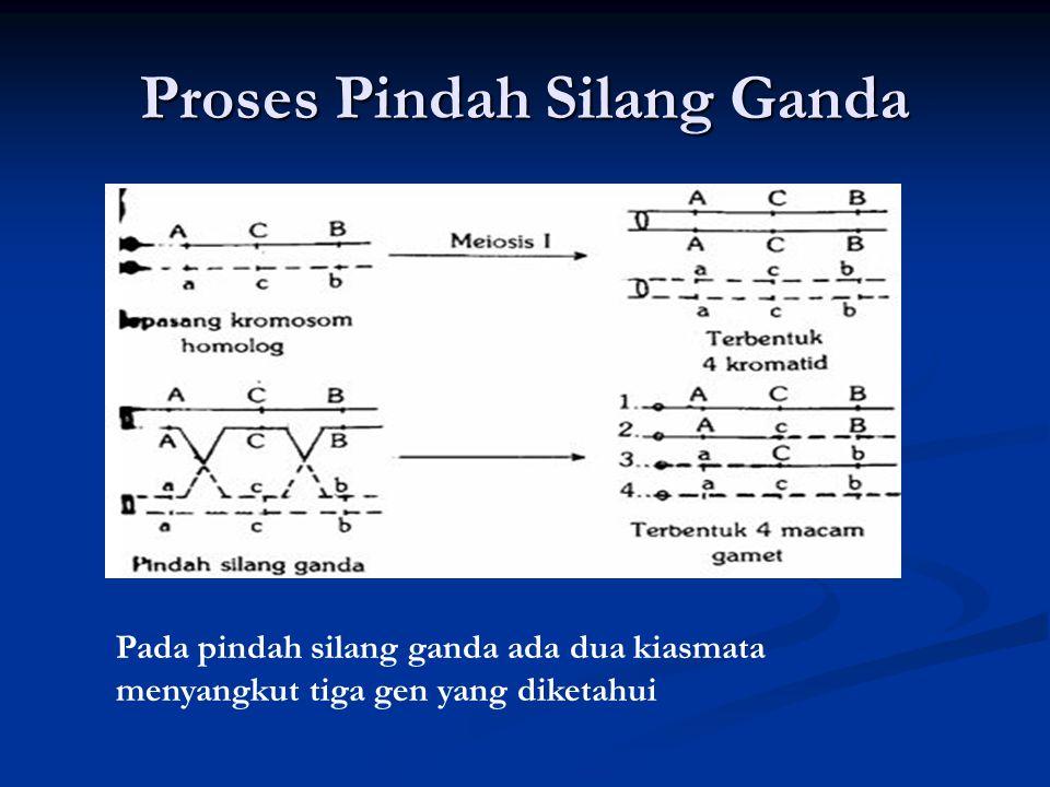 Proses Pindah Silang Ganda Pada pindah silang ganda ada dua kiasmata menyangkut tiga gen yang diketahui