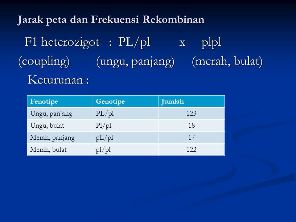 Jarak peta dan Frekuensi Rekombinan F1 heterozigot : PL/pl x plpl F1 heterozigot : PL/pl x plpl (coupling) (ungu, panjang) (merah, bulat) Keturunan :