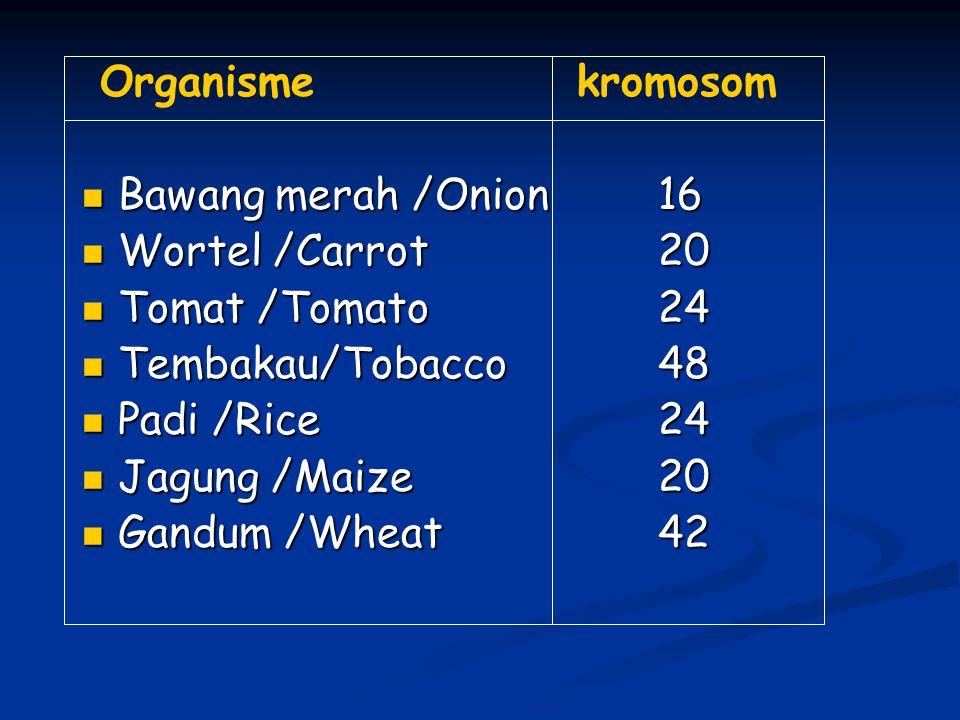 Organisme kromosom Bawang merah /Onion16 Bawang merah /Onion16 Wortel /Carrot 20 Wortel /Carrot 20 Tomat /Tomato 24 Tomat /Tomato 24 Tembakau/Tobacco