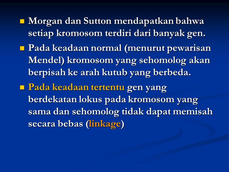 Morgan dan Sutton mendapatkan bahwa setiap kromosom terdiri dari banyak gen. Morgan dan Sutton mendapatkan bahwa setiap kromosom terdiri dari banyak g