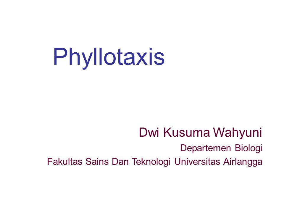Phyllotaxis Dwi Kusuma Wahyuni Departemen Biologi Fakultas Sains Dan Teknologi Universitas Airlangga