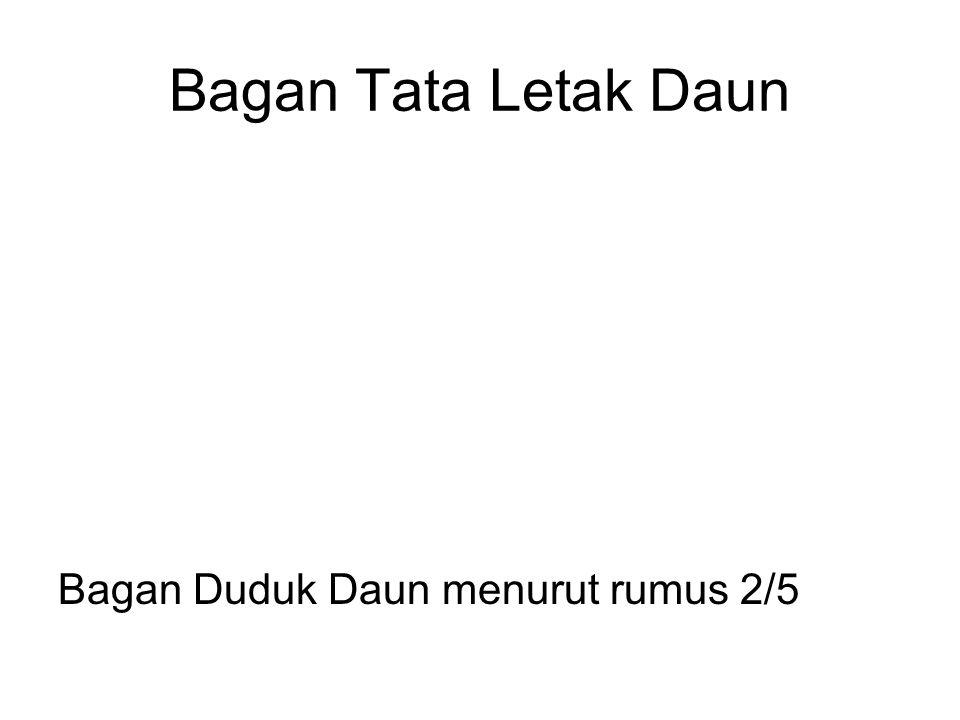 Bagan Tata Letak Daun Bagan Duduk Daun menurut rumus 2/5