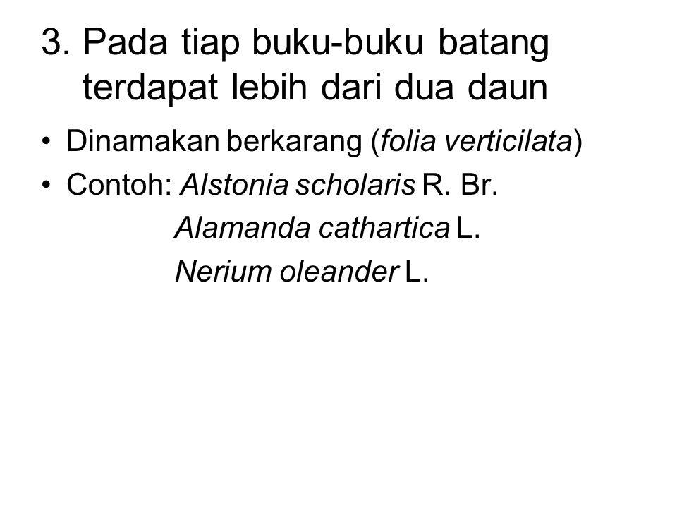 3. Pada tiap buku-buku batang terdapat lebih dari dua daun Dinamakan berkarang (folia verticilata) Contoh: Alstonia scholaris R. Br. Alamanda catharti