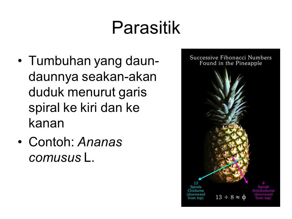 Parasitik Tumbuhan yang daun- daunnya seakan-akan duduk menurut garis spiral ke kiri dan ke kanan Contoh: Ananas comusus L.
