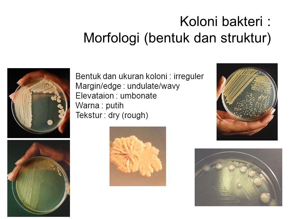Koloni bakteri : Morfologi (bentuk dan struktur) Bentuk dan ukuran koloni : irreguler Margin/edge : undulate/wavy Elevataion : umbonate Warna : putih