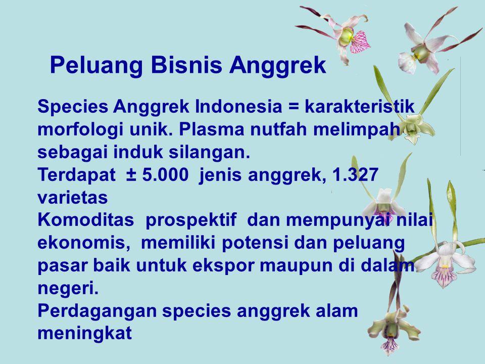 Species Anggrek Indonesia = karakteristik morfologi unik.