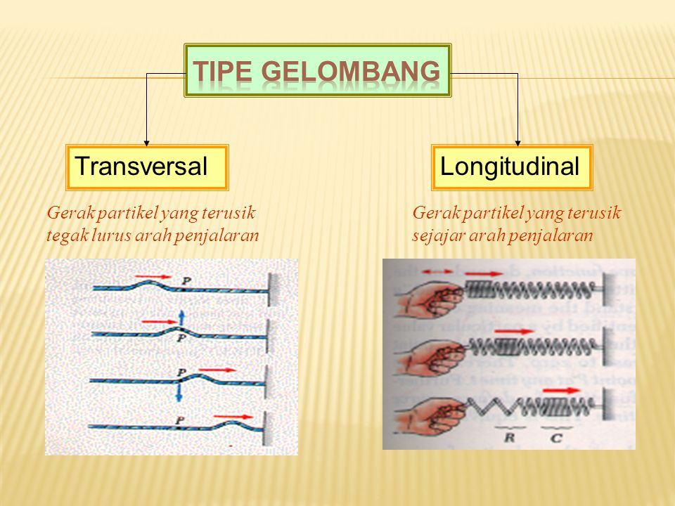 TransversalLongitudinal Gerak partikel yang terusik tegak lurus arah penjalaran Gerak partikel yang terusik sejajar arah penjalaran