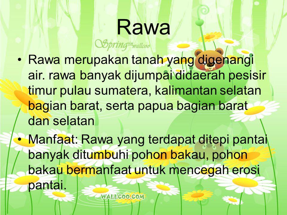 Rawa Rawa merupakan tanah yang digenangi air. rawa banyak dijumpai didaerah pesisir timur pulau sumatera, kalimantan selatan bagian barat, serta papua