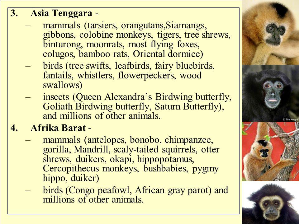 3.Asia Tenggara - –mammals (tarsiers, orangutans,Siamangs, gibbons, colobine monkeys, tigers, tree shrews, binturong, moonrats, most flying foxes, col