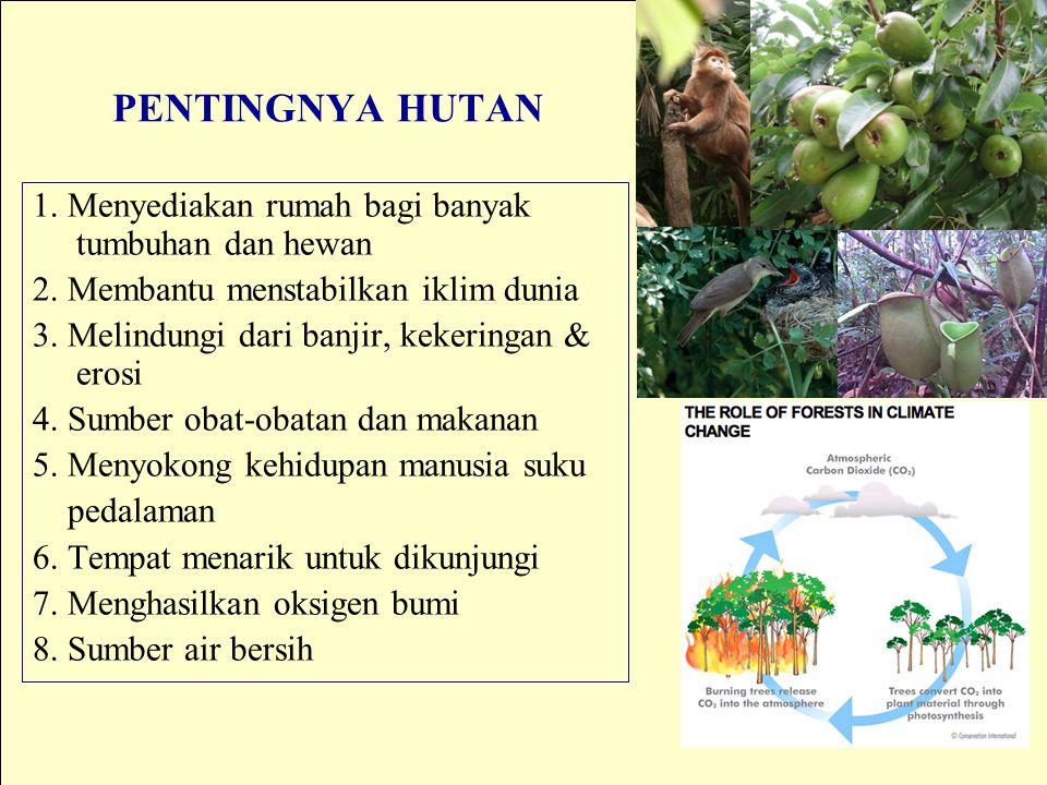 PENTINGNYA HUTAN 1. Menyediakan rumah bagi banyak tumbuhan dan hewan 2. Membantu menstabilkan iklim dunia 3. Melindungi dari banjir, kekeringan & eros