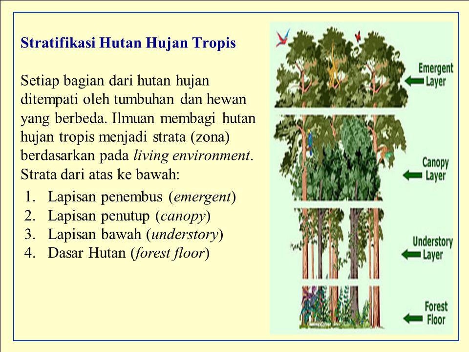 Stratifikasi Hutan Hujan Tropis Setiap bagian dari hutan hujan ditempati oleh tumbuhan dan hewan yang berbeda. Ilmuan membagi hutan hujan tropis menja