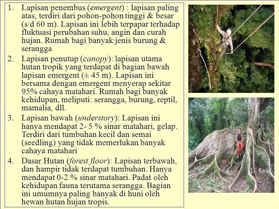 1.Lapisan penembus (emergent) : lapisan paling atas, terdiri dari pohon-pohon tinggi & besar (s/d 60 m). Lapisan ini lebih terpapar terhadap fluktuasi