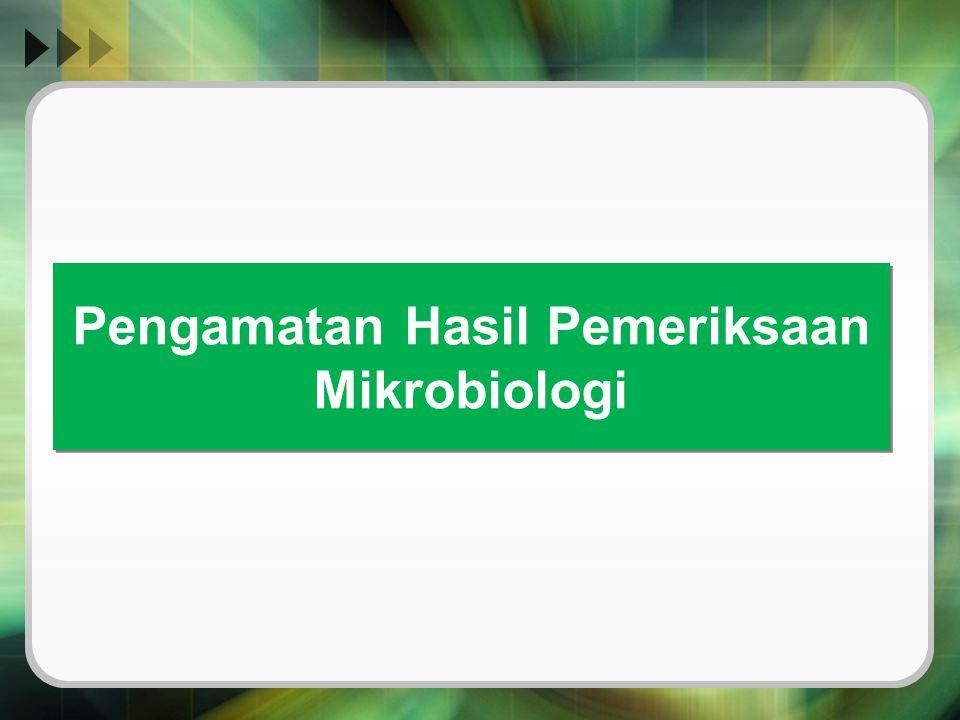 Pengamatan Hasil Pemeriksaan Mikrobiologi