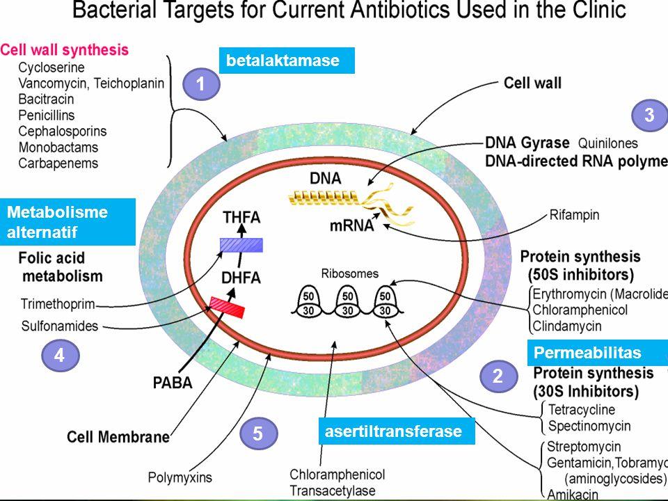 1 3 2 5 4 betalaktamase asertiltransferase Permeabilitas Metabolisme alternatif