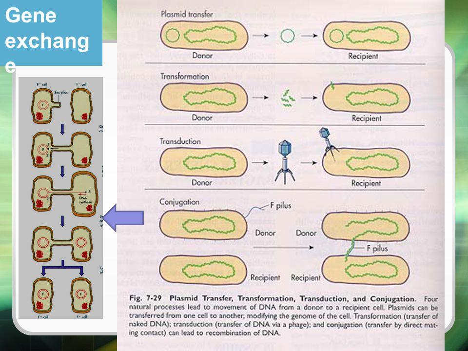 Gene exchang e