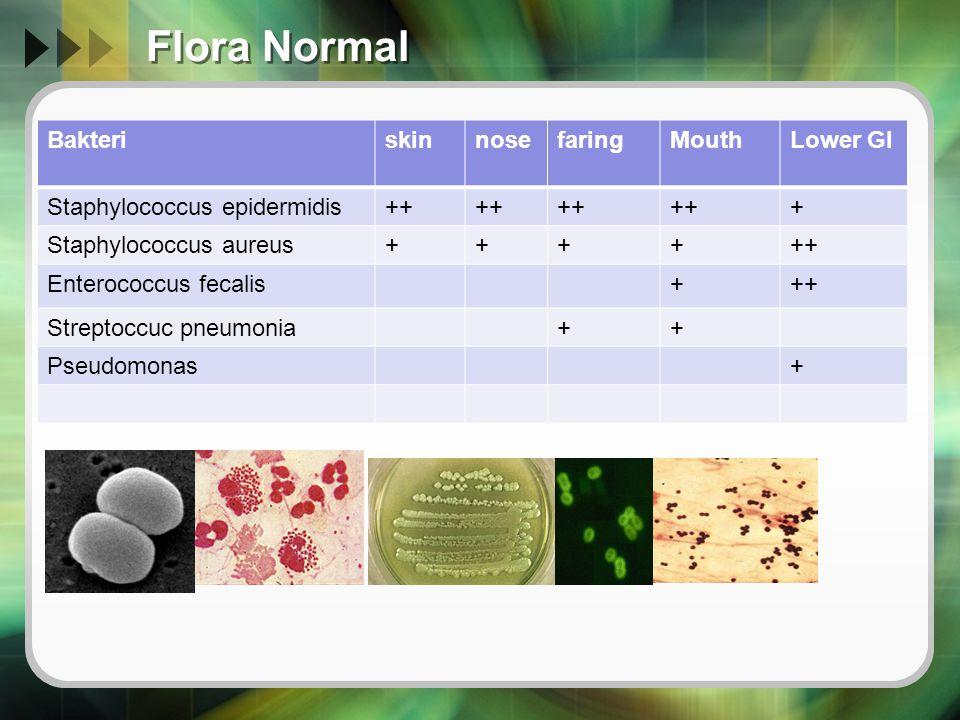 Flora Normal BakteriskinnosefaringMouthLower GI Staphylococcus epidermidis++ + Staphylococcus aureus++++++ Enterococcus fecalis+++ Streptoccuc pneumon