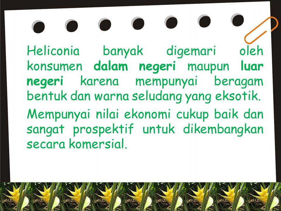  Heliconia sp florikultura tropis Indonesia  Berasal dari Amerika Latin  Jumlah spesies mencapai 35 spesies  Tumbuh di daerah NTB, Bali, dan Jawa Barat  Bermanfaat sebagai bunga potong