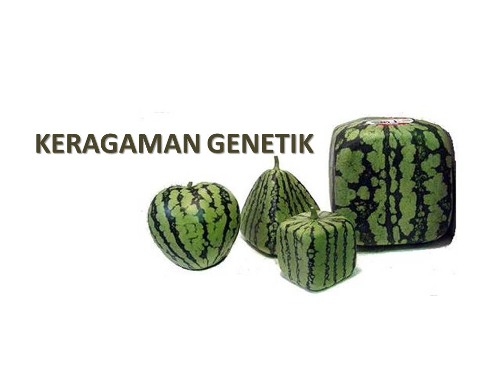 KERAGAMAN GENETIK