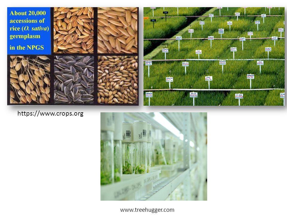 https://www.crops.org www.treehugger.com