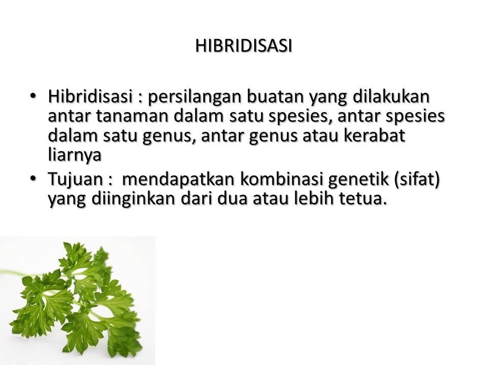 HIBRIDISASI Hibridisasi : persilangan buatan yang dilakukan antar tanaman dalam satu spesies, antar spesies dalam satu genus, antar genus atau kerabat