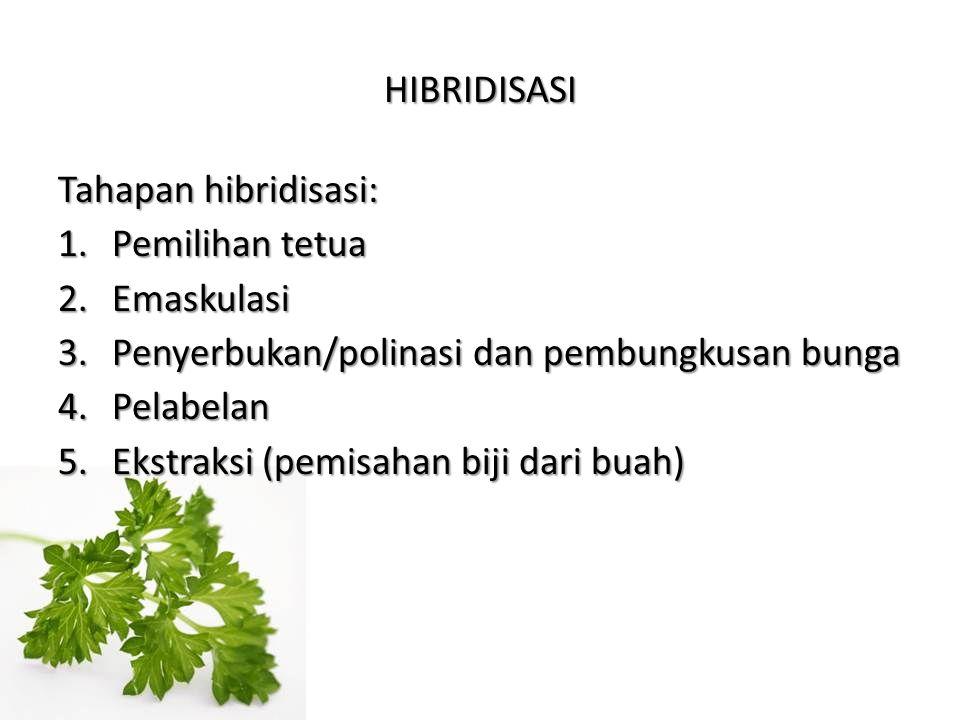 HIBRIDISASI Tahapan hibridisasi: 1.Pemilihan tetua 2.Emaskulasi 3.Penyerbukan/polinasi dan pembungkusan bunga 4.Pelabelan 5.Ekstraksi (pemisahan biji