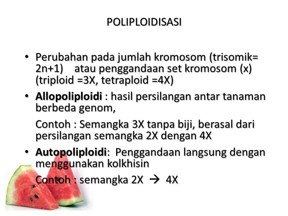 POLIPLOIDISASI Perubahan pada jumlah kromosom (trisomik= 2n+1) atau penggandaan set kromosom (x) (triploid =3X, tetraploid =4X) Perubahan pada jumlah