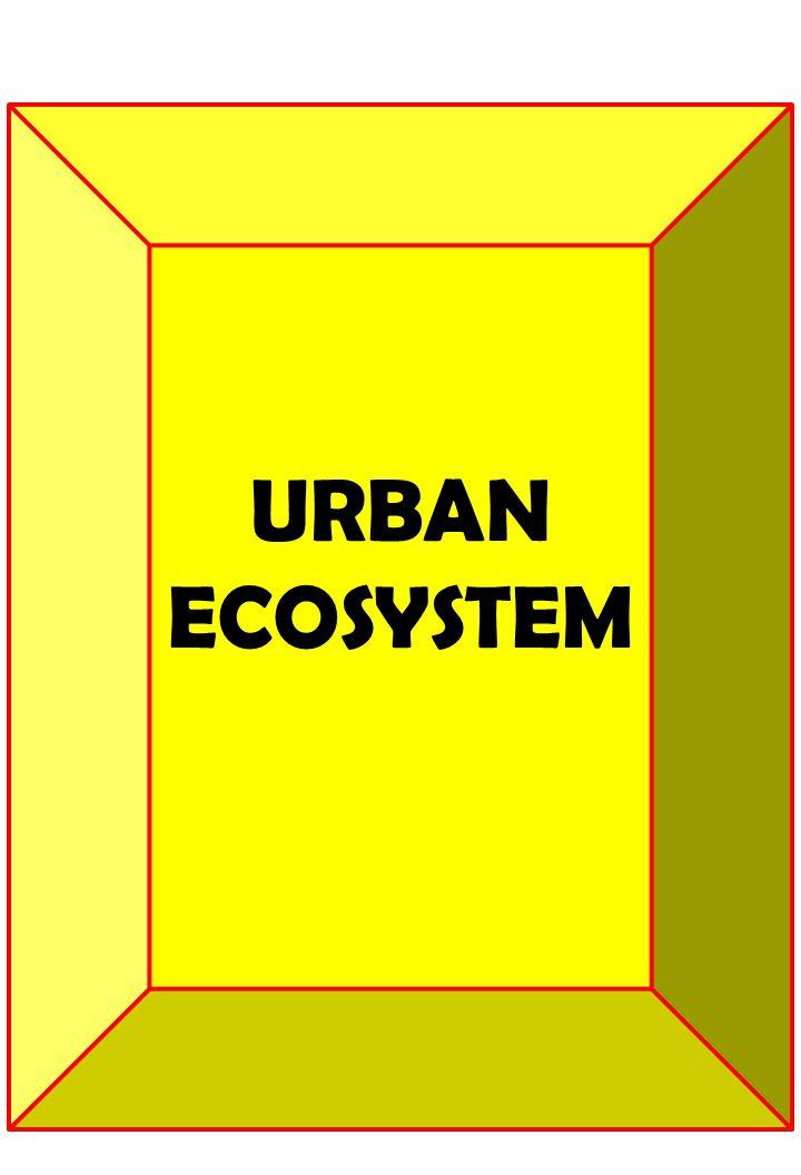 URBAN ECOSYSTEM