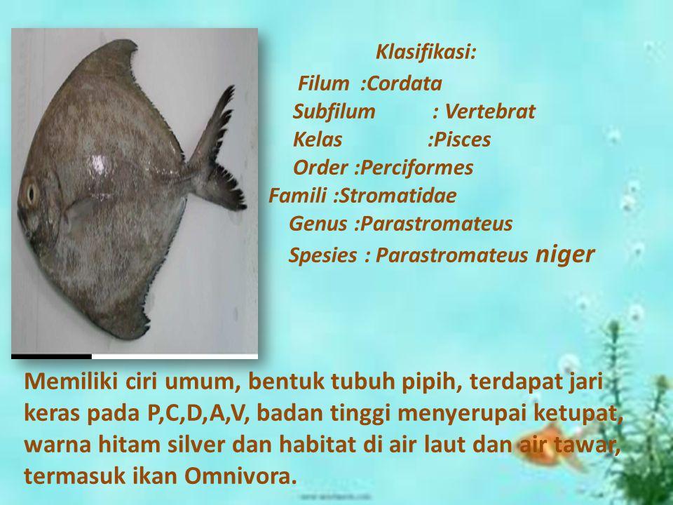 Klasifikasi: Filum :Cordata Subfilum : Vertebrat Kelas :Pisces Order :Perciformes Famili :Stromatidae Genus :Parastromateus Spesies : Parastromateus n