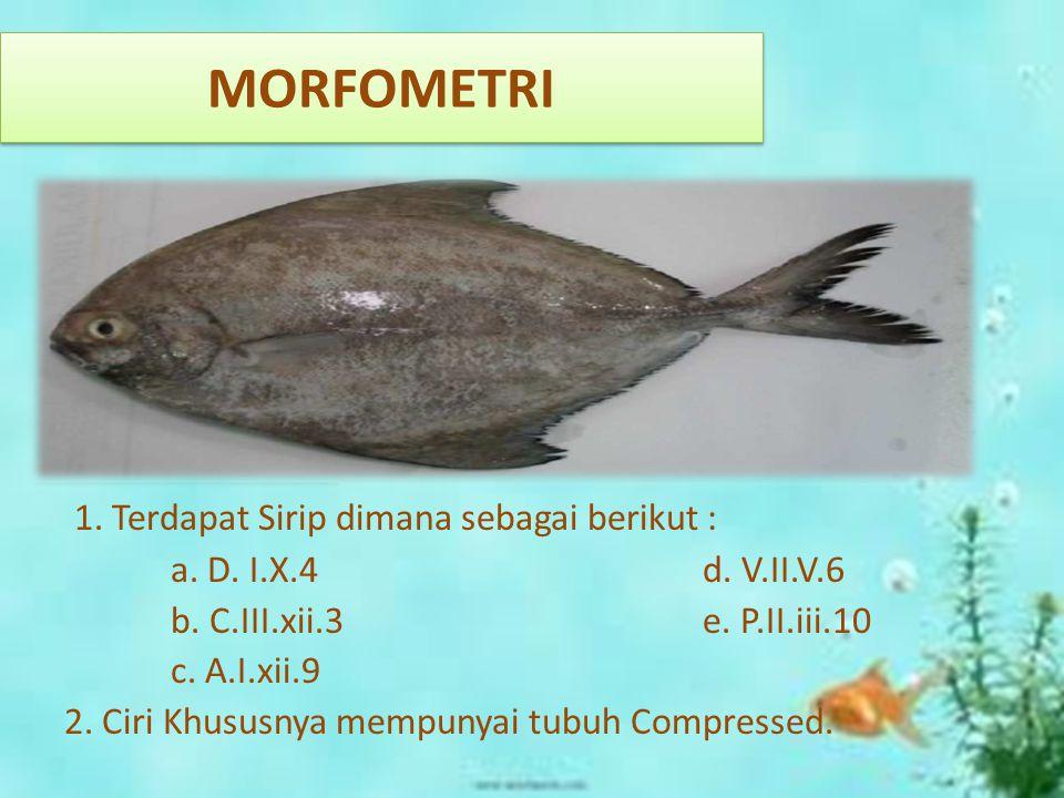 MORFOMETRI 1. Terdapat Sirip dimana sebagai berikut : a. D. I.X.4d. V.II.V.6 b. C.III.xii.3e. P.II.iii.10 c. A.I.xii.9 2. Ciri Khususnya mempunyai tub