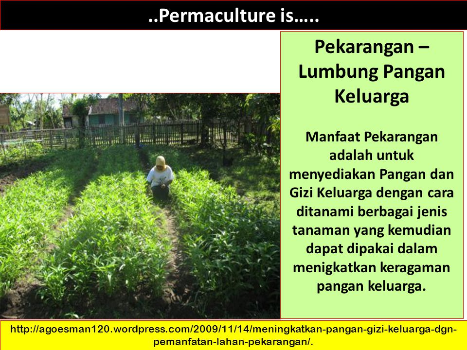 ..Permaculture is…..