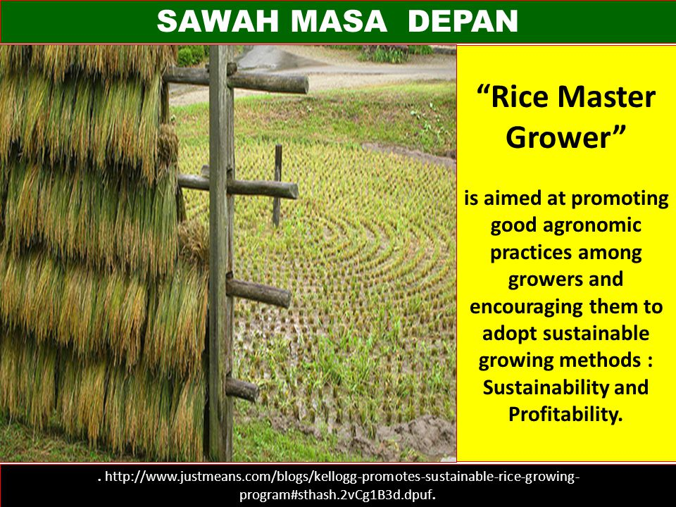 "SAWAH MASA DEPAN. http://www.justmeans.com/blogs/kellogg-promotes-sustainable-rice-growing- program#sthash.2vCg1B3d.dpuf. ""Rice Master Grower"" is aime"