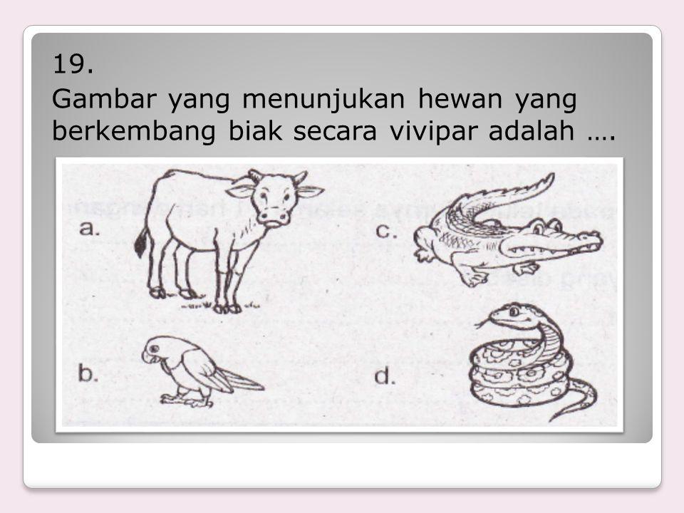 18. Peristiwa bertemunya sel kelamin jantan dengan sel kelamin betina disebut …. a. Perkawinan b. Vegetatif c. Persatuan d. Generatif