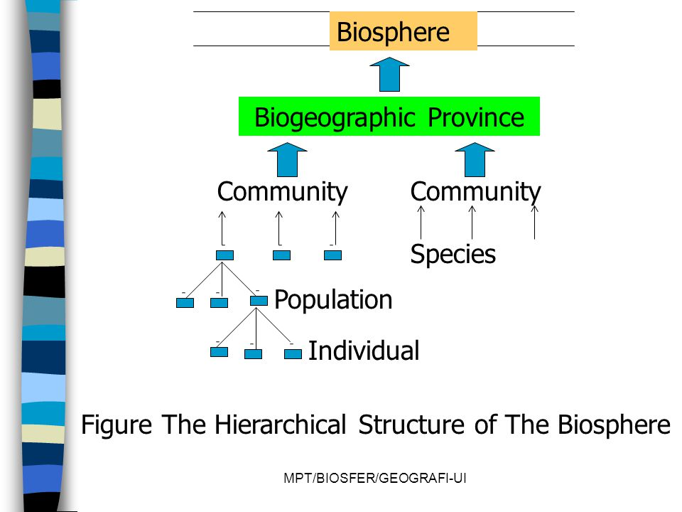 MPT/BIOSFER/GEOGRAFI-UI Biosphere Biogeographic Province Community Species Population Individual Figure The Hierarchical Structure of The Biosphere